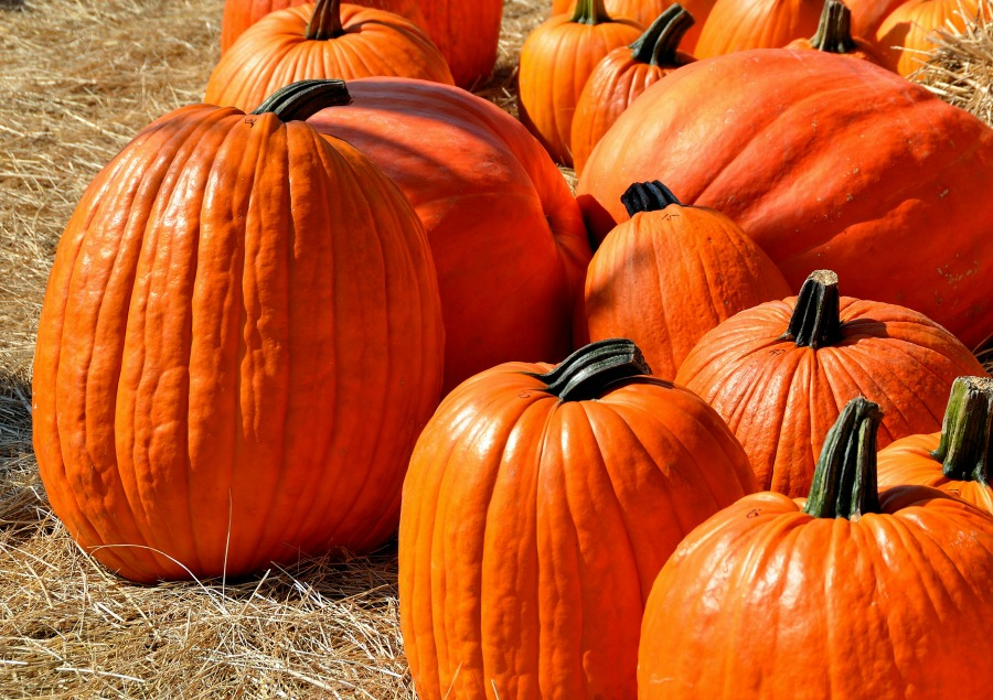 Pumpkin seed oil for hair loss may work as a natural DHT inhibitor