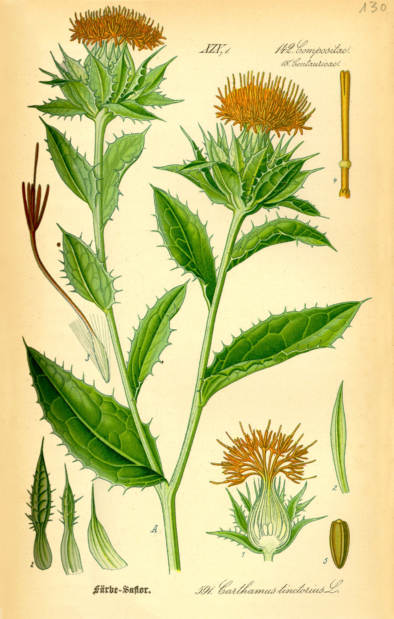 Safflower Floret Extract For Hair What Scientists Are Saying Dr Ugro