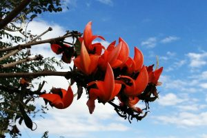 The Tesu flower for hair follicle health may reduce hair loss and improve growth.