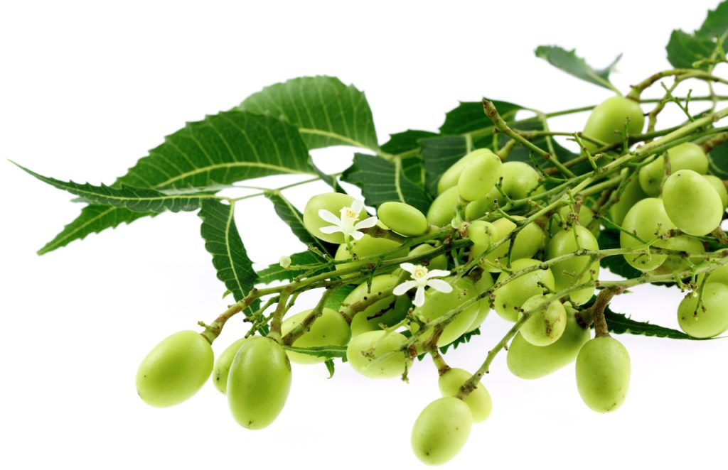 Neem hair oil offers cleansing and softening properties