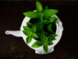 Researchers investigate the use of peppermint oil for the hair.