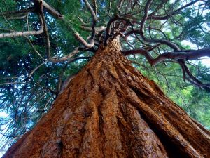 Tall Oil For Hair Is Derived From Coniferous Trees