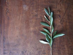 Antimicrobial and anti-inflammatory properties of olive leaf benefits for hair growth may help stave off secondary factors that contribute to hair loss