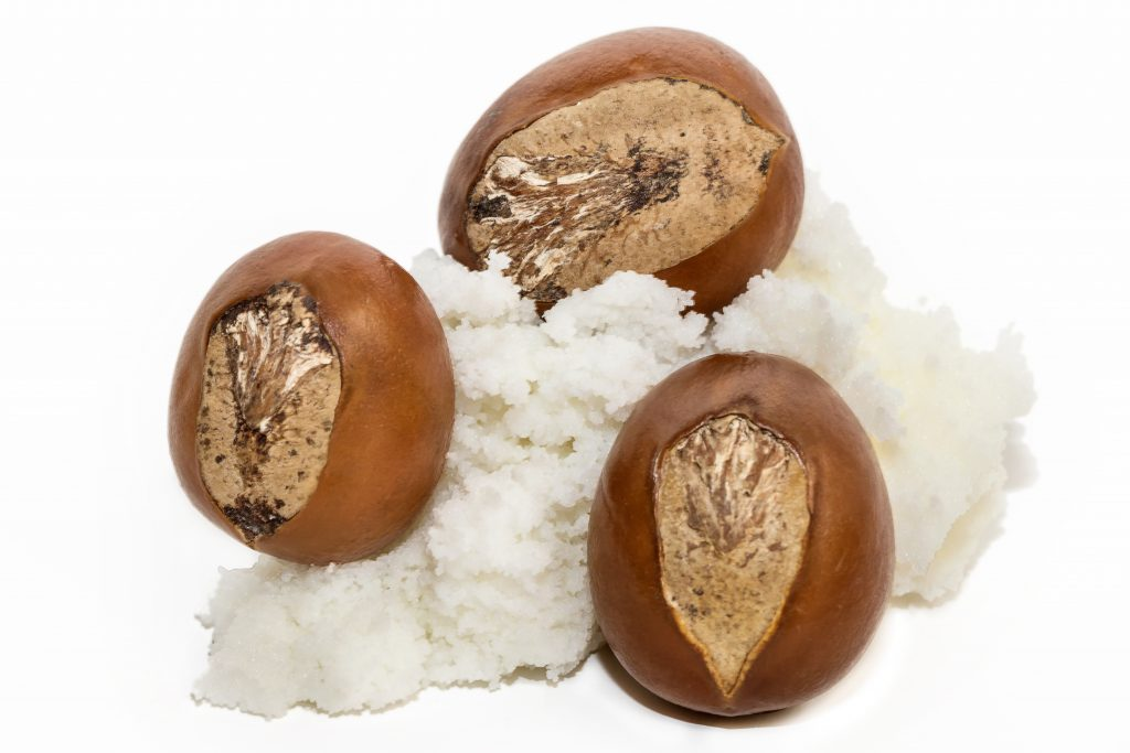 "Shea butter is extracted from the nut of the Shea ""karite"" tree (Vitellaria paradoxa)"