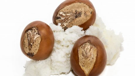 """Shea butter is extracted from the nut of the Shea """"karite"""" tree (Vitellaria paradoxa)"""