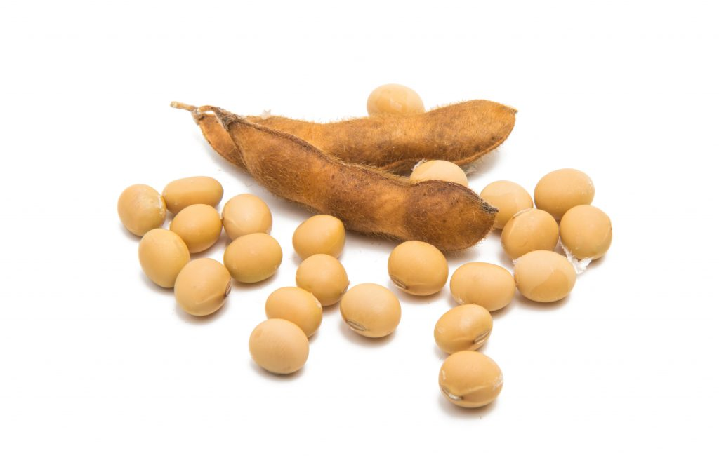 Scientists are studying the ffect of soy bean, soy isoflavones and soy oil on hair
