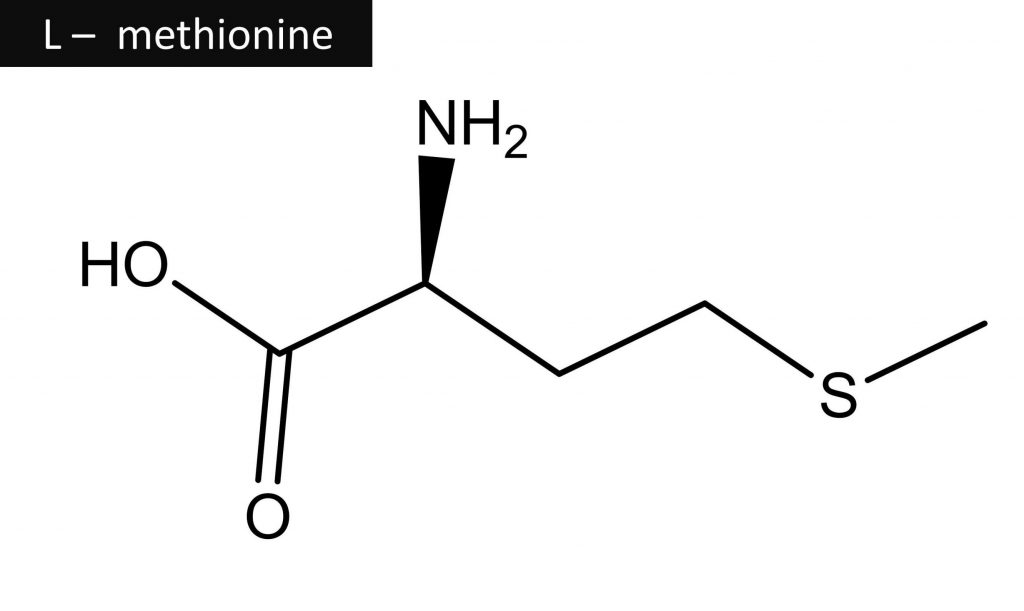 The essential amino acid methionine is being studied by scientists for its possible effects on hair growth
