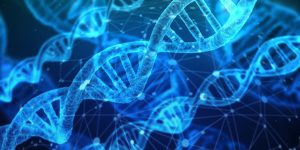 Methionine May Influence Genetic Expression to Improve Hair Growth Capacity
