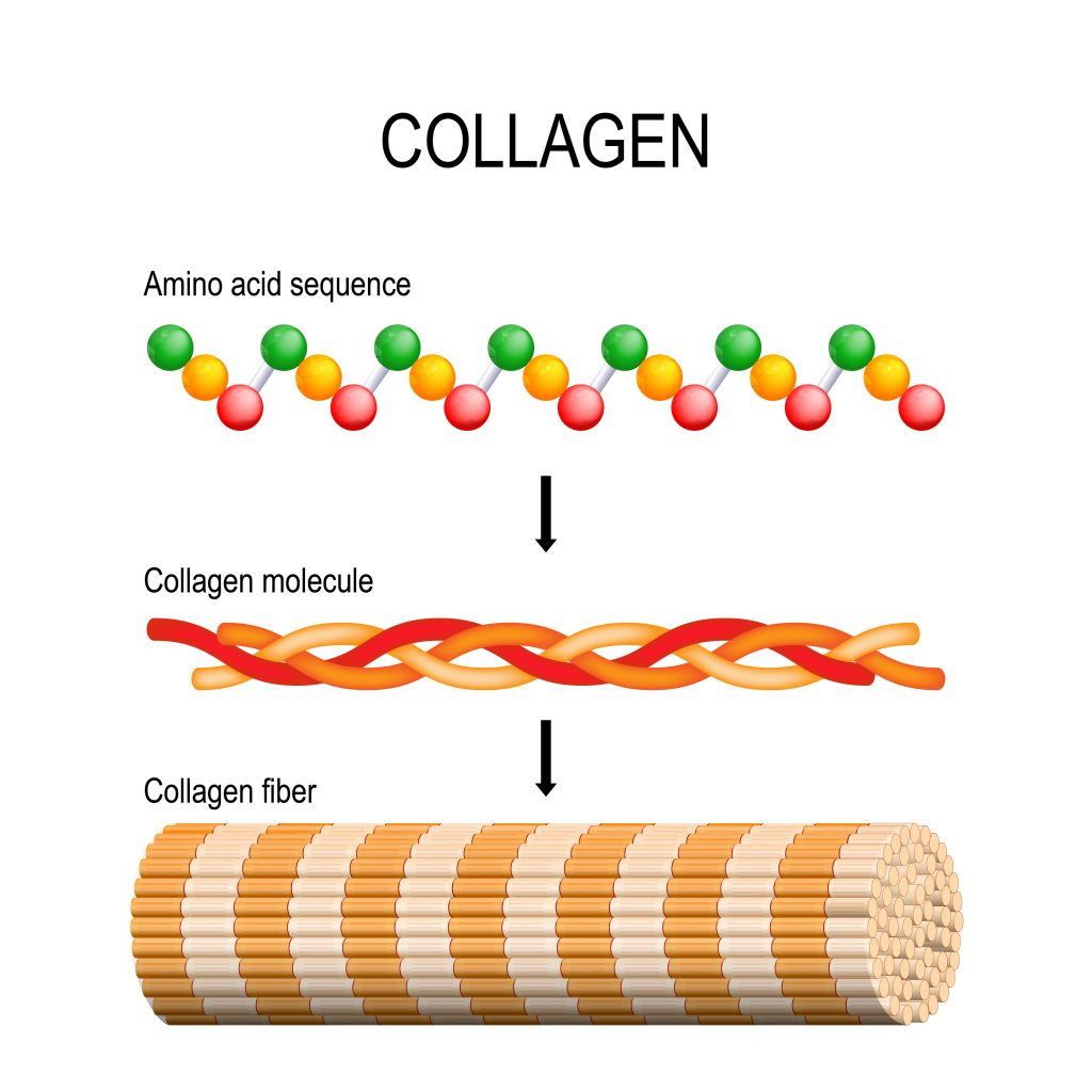 Collagen which plays a vital role in hair health consists of amino acid chains that form a polypeptide coil, three polypeptides coil to form tropocollagen. Tropocollagens bind together to form a fibril. Many fibrils bind together to form a collagen fiber.